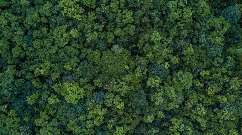 Area boscata